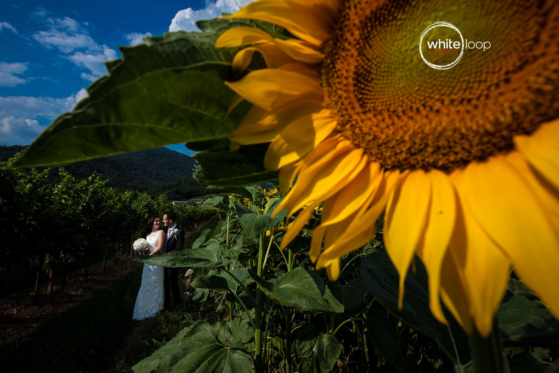 In a countryside landscape of Northern Italy protagonist is a beautiful sunflower which is framing the love of the bride and groom, holding each other.